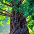 樹木のエネルギー