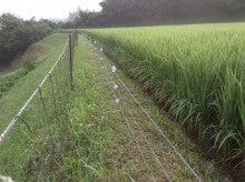 アイガモ米管理