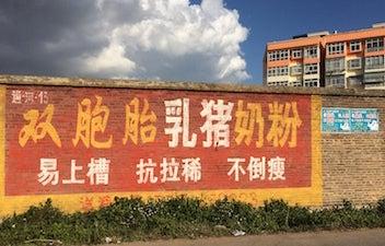 中国双子豚粉ミルク1