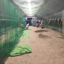 新潟市学童野球チーム…