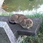 猫侍(感想風)
