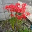 近道に咲く花。