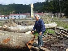 ①関ヶ原の材木店にて、原木を吟味