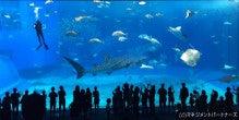 ちゅら海水族館