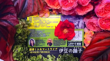 伊豆の踊子チラシ花