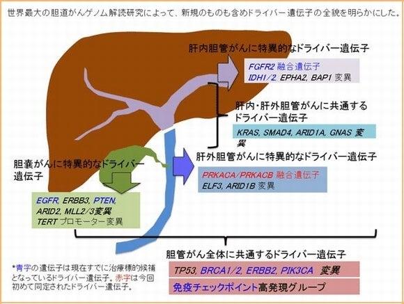 胆道がんゲノム