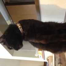我が家の黒猫ジジ(=…