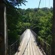 新潟県関川村の鷹の巣…