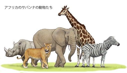 アフリカサバンナの動物