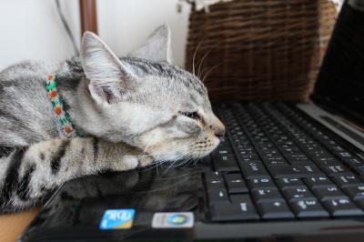 追い込まれた猫