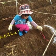 お芋掘り初体験!