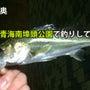 【釣果報告】東京湾奥…