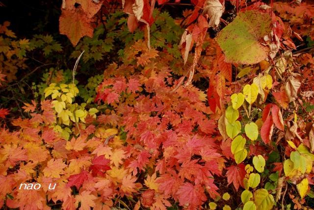 風景写真 紅葉