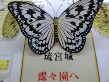 冬の沖縄子連れ旅行⑤琉宮城蝶々園~美ら海水族館