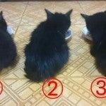 元気いっぱいコロコロ黒猫3兄弟1.5ヶ月弱.jpg