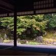 石蕗の寺圓徳院