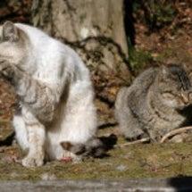 一日一猫:11月6日…
