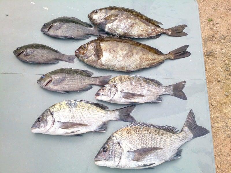 海釣り釣果