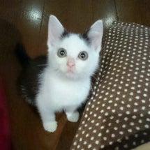●仔猫の里親さん募集…