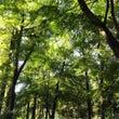 森林のある公園