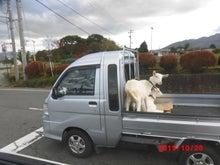 伊那市でヤギさん遭遇