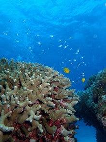 サンゴ植え付け9