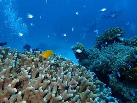 サンゴ植え付け8