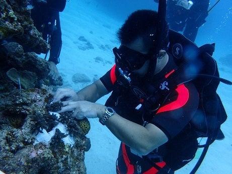 サンゴ植え付け4