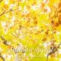 Autumn spi…