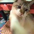 猫パンチ☆強化練習