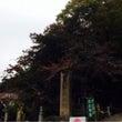 秋の高尾山☆