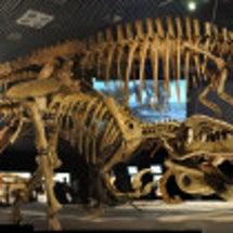 恐竜の進化「アーロと…