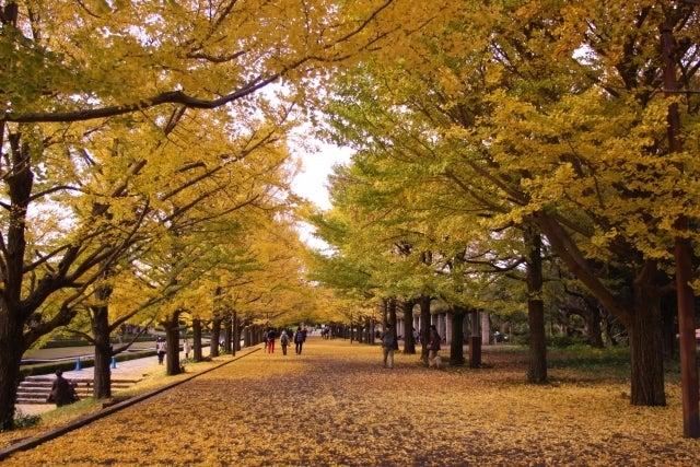 紅葉 並木道