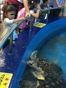 孫とウミガメ