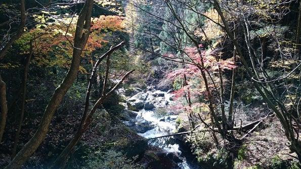 川苔山、晩秋