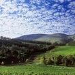 南アフリカのワインが…