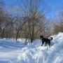 雪が恋しいでしょ♪