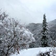 信州 八坂の 冬