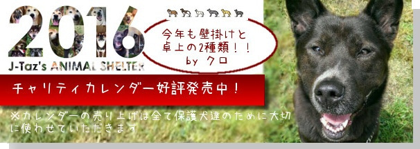 http://ameblo.jp/dog-rescue/entry-12101002046.html