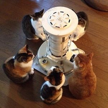 猫の打ち合わせ