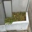植物観察日記②「~ア…