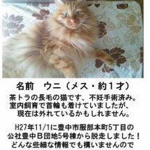 【迷子猫(大阪 豊中…