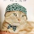 ドロボー猫の完成っ☆…