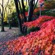 大学の紅葉