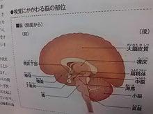 嗅覚にかかわる脳の部位