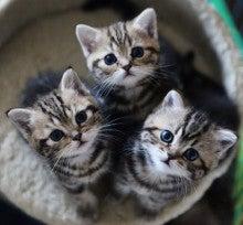 猫の集合写真の破壊力が身にしみる画像