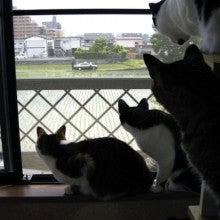 何かを見つめる猫の画像