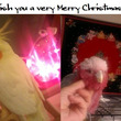 皆様鳥様良いクリスマ…