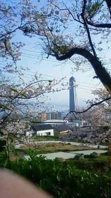 メッセと桜