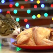 猫とクリスマスと一羽…